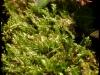 Posternr. 00081 - new moss