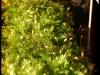 Posternr. 00083 - new moss