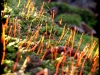 Posternr. 00084 - new moss