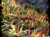 Posternr. 00085 - new moss