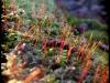 Posternr. 00086 - new moss