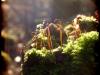 Posternr. 00088 - new moss