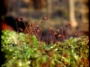 Posternr. 00089 - new moss