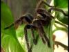 22.04.2011 - vpunkt's spider