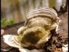 Posternr. 00092 - bracket fungi