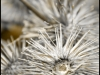 05.09.2012 - withered thistle
