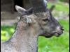 04.08.2013 - Heimat-Tierpark Olderdissen