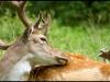 04.08.2013 - (wildpark / leipzig)